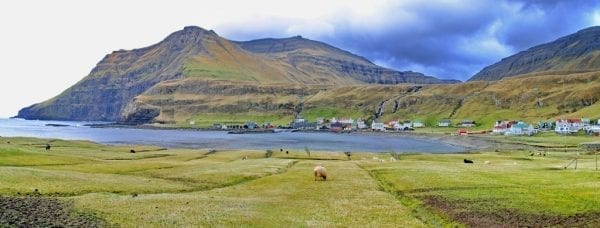 Famjin in the Faroe Islands sheep
