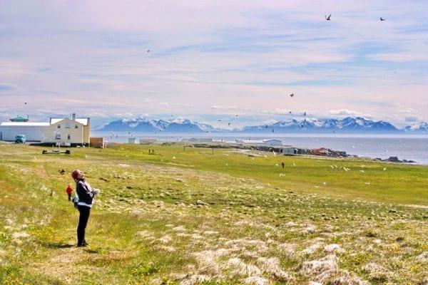 Grímsey island Iceland