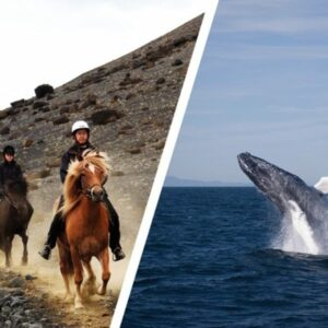 whales & horses