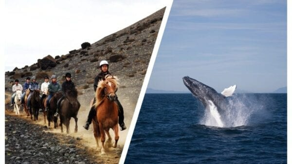 whales & horses